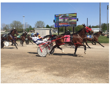 horse chariot race in front of outdoor screen
